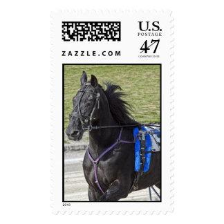 Caballo de arnés sellos postales