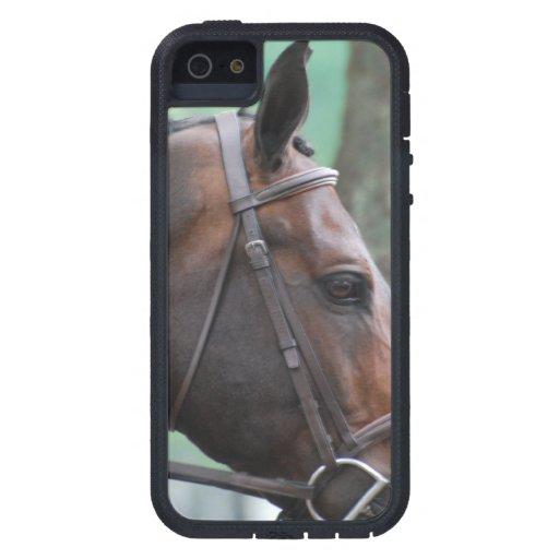 Caballo de bahía oscuro clavado con tachuelas iPhone 5 Case-Mate protectores