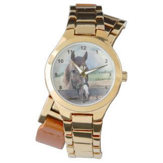 Caballo de Brown con el halter Relojes