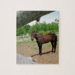Caballo de Brown detrás de la cerca Puzzles Con Fotos