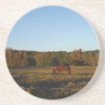 Caballo de Brown en el Sun Posavasos Personalizados