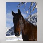 Caballo de Brown en invierno Posters
