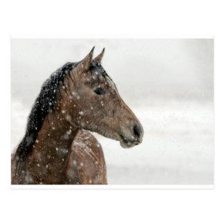 Caballo de Brown en nieve Postal