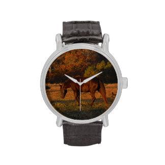 Caballo de Brown en un campo del otoño Relojes