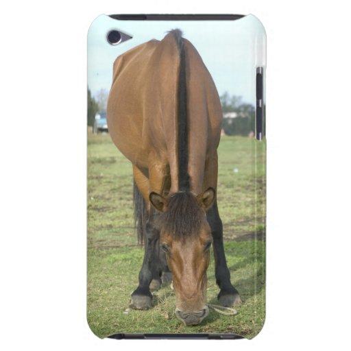 Caballo de Brown iPod Touch Case-Mate Protectores