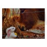 Caballo de Brown y conejito de pascua miniatura Tarjetas
