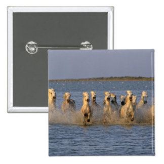 Caballo de Camargue (caballus del Equus) Pin