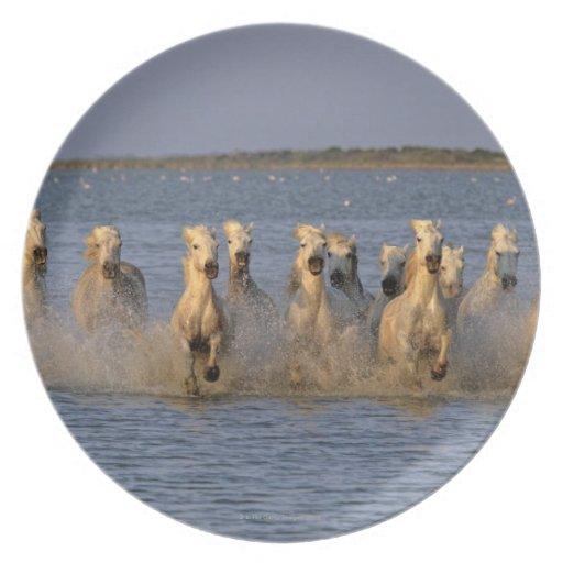 Caballo de Camargue (caballus del Equus) Platos De Comidas