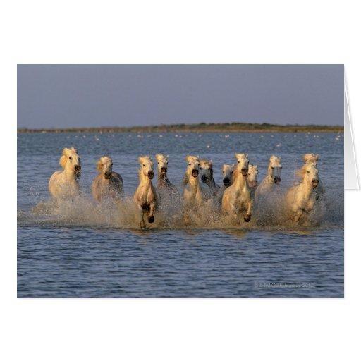 Caballo de Camargue (caballus del Equus) Tarjeta De Felicitación