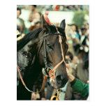 Caballo de carreras excelente 1978 de la ciénaga d tarjeta postal