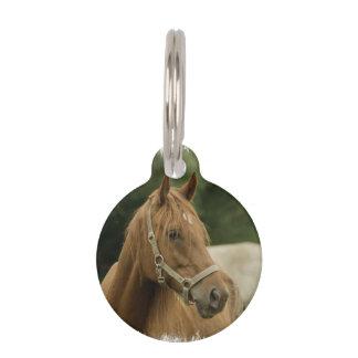 Caballo de la castaña en un campo placa para mascotas
