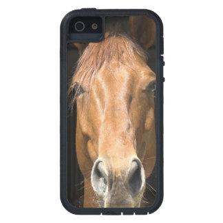 Caballo de la castaña iPhone 5 funda