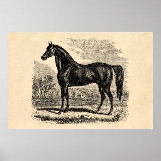 Caballo de los 1800s del vintage - plantilla del E Póster