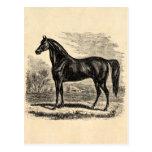 Caballo de los 1800s del vintage - plantilla del E Tarjetas Postales