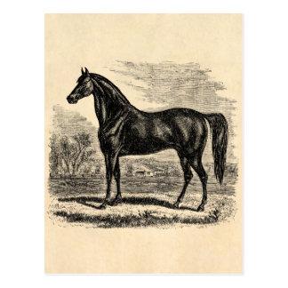 Caballo de los 1800s del vintage - plantilla del tarjetas postales