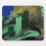 Caballo de mar alfombrillas de raton