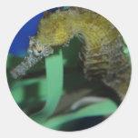 Caballo de mar etiqueta redonda