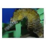 Caballo de mar tarjetón