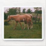 Caballo de Moma y caballo del bebé Alfombrilla De Ratón