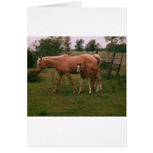 Caballo de Moma y caballo del bebé Tarjeta De Felicitación