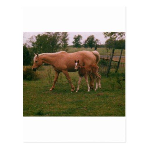 Caballo de Moma y caballo del bebé Tarjetas Postales
