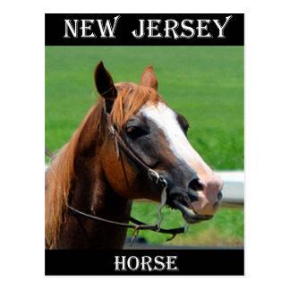 Caballo de New Jersey Postales