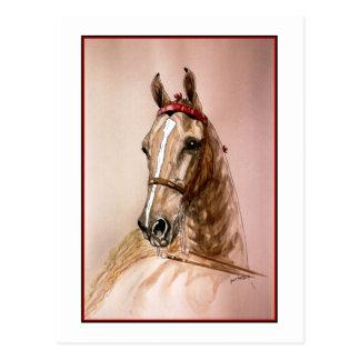 Caballo de Saddlebred del americano Postales