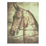 Caballo de Saddlebred Tarjetas Postales