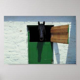 Caballo de Stabled con la puerta francesa Impresiones