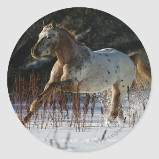 Caballo del Appaloosa que corre en la nieve Pegatina Redonda