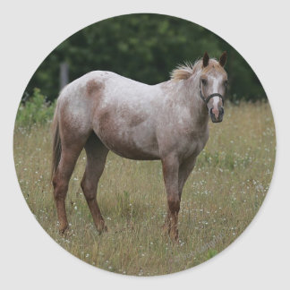 Caballo del Appaloosa que se coloca en la hierba Pegatina Redonda