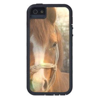 Caballo del árabe de la castaña iPhone 5 fundas