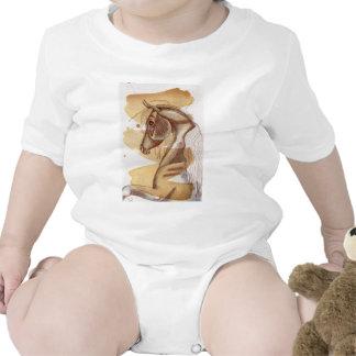 Caballo del Palomino en lavado de la acuarela del Traje De Bebé