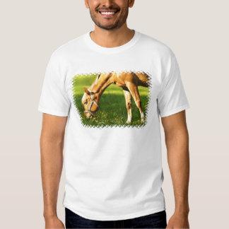 Caballo del Palomino que pasta la camiseta del Playeras