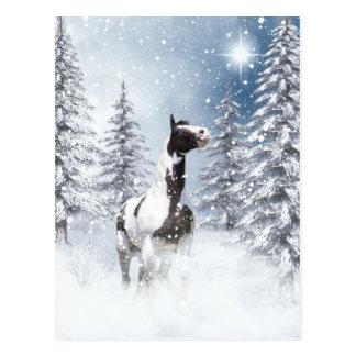 Caballo del pinto del invierno postal