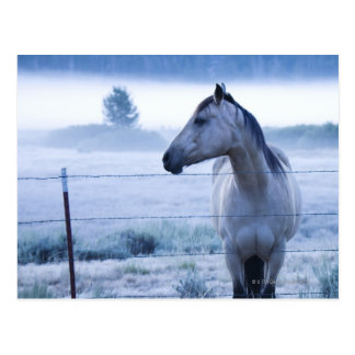 Caballo en campo nebuloso postal
