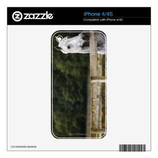 Caballo en el campo que mira sobre la cerca iPhone 4 calcomanías