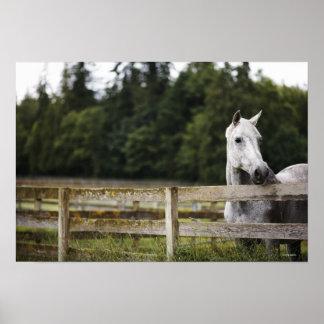 Caballo en el campo que mira sobre la cerca poster
