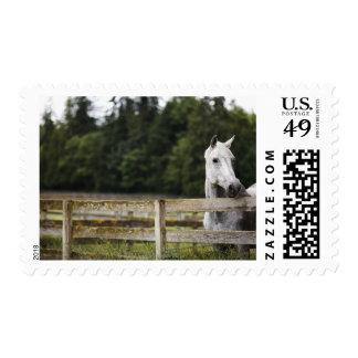 Caballo en el campo que mira sobre la cerca sello