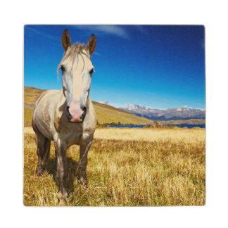 Caballo en el parque nacional de Torres del Paine, Posavasos De Arce