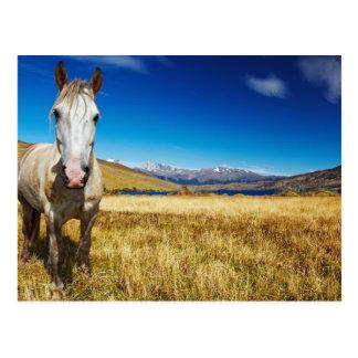 Caballo en el parque nacional de Torres del Paine, Postales