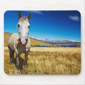 Caballo en el parque nacional de Torres del Paine, Tapete De Ratones