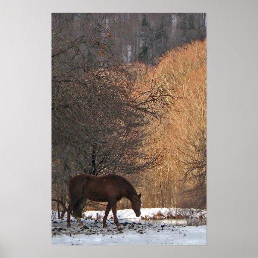 Caballo en invierno poster