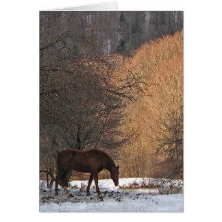 Caballo en invierno tarjetas