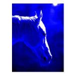 Caballo en la noche - caballo en claro de luna tarjeta postal