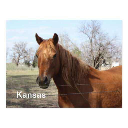 Caballo en la postal de Kansas