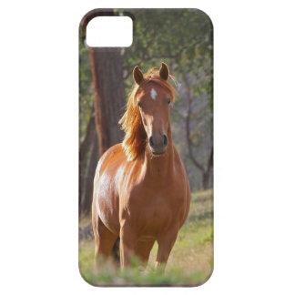 Caballo en las maderas iPhone 5 Case-Mate carcasa