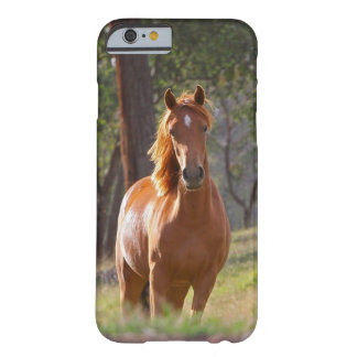 Caballo en las maderas funda barely there iPhone 6