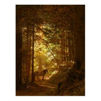 Caballo en mágico el bosque del Lit Tarjetas Postales