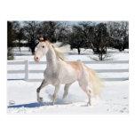 Caballo en nieve postal